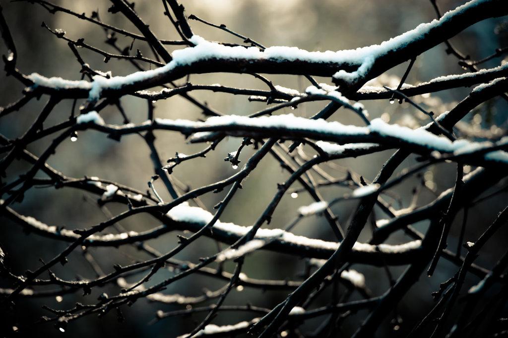 snow-0115-067.jpg
