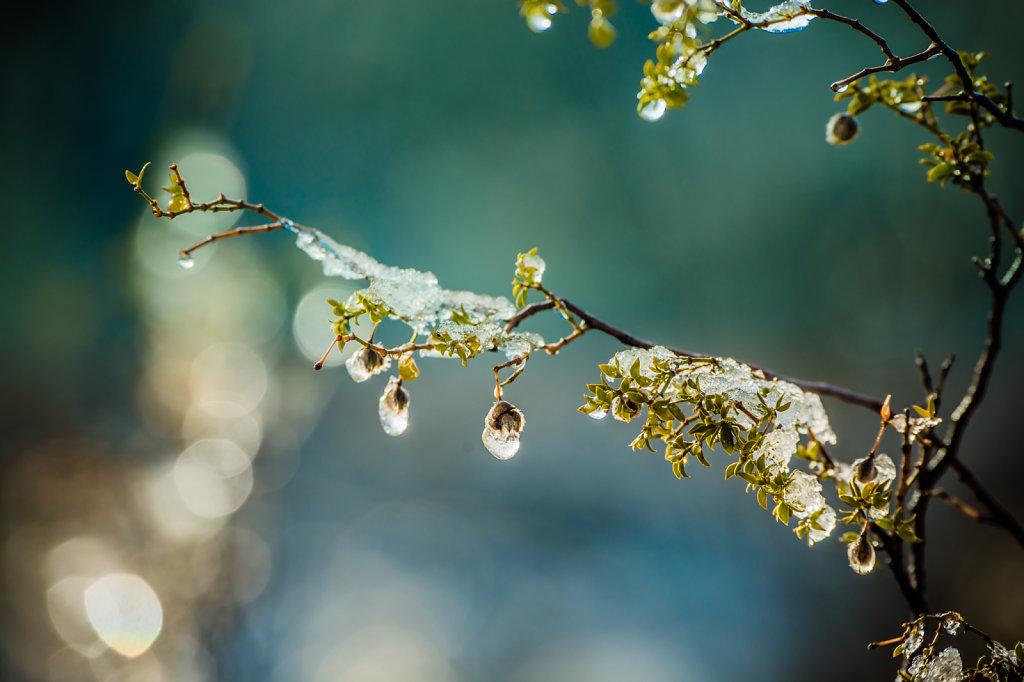 snow-0115-095.jpg