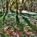 madera-canyon_1011_035_900px