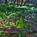 madera-canyon_1011_192_900px