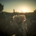 cactus-flower_900px