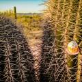 cupcake-in-cactus_900px