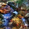 madera-canyon_1011_086_900px