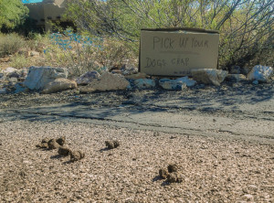 pick-up-dogs-crap